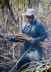 Sugarcane cutter at SER Antonio © Joe Woodruff / Bonsucro